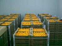 Washington Orange