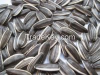 2014 crop confectionary sunflower seeds for sale