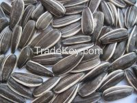 2014 dired raw sunflower seeds black with strip 5009 type