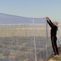 Insect proof net / anti insect net for greenhouse
