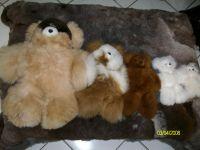 TEDDY BEAR 泰迪熊