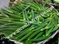 Fresh Vegetables, Green vegetables, Okra, Capsicum, Onion, Potato,