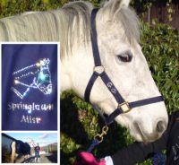 Exclusive GG Bling Horse and Pony Show & Travel Kit