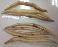 Eel Fishmaw