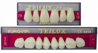 Acrylic Teeth - Trilux