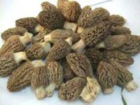 Fresh Dried or Frozen Morel Mushrooms