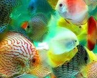 tropical fish / Ornamental fish