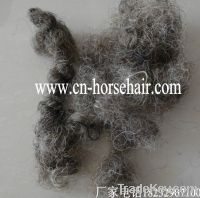 curled horse hair for mattress