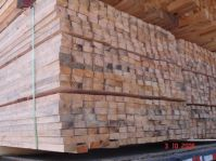 lumber pine eucalyptus
