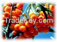Seabuckthorn Pulp Oil Cas No.: 135669-41-9