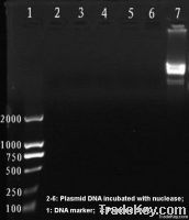 Recombinant nuclease