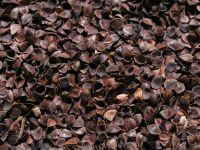 roasted buckwheat husk hull