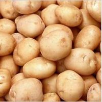 Fresh Potatoes Export Quality