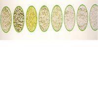 a k super basmati rice