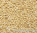 beans, peas, millet, oat (China)