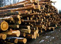 Timber Wood (White)