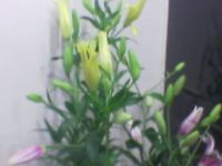 fresh cut flowers