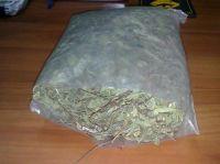 supply mint leaf