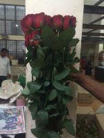 fresh cut Rose