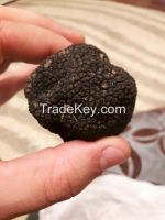 Morchella & Black-White Truffle