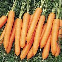 Bangor F1 Carrot