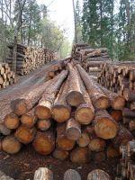 Poplar Woods Logs, Pine Woods Logs, African Teak Wood Logs.