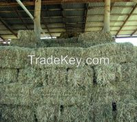 Timothy Hay.Alfalfa.Oat,r/ Bermuda/Rhode Hay/Animal feeds