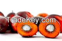 Palm Olein CP8/CP10/RBD Palm Olein/Palm Oil/ Palm Stearin