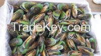 New Zealand Green Shell Mussels