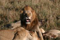 Kenya Safari - Kenya Highlight Safari by Essenia Safaris
