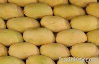 Sindhri Mango Pakistani Mango