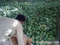 Chaunsa Mango Pakistani Mango
