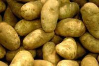 Fresh Potatoes  [Yellow Skin/Red Skin]