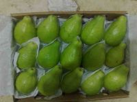 Egyptian Fresh guava