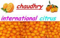 mandrain orange