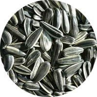 New Crop Sunflower Seeds Suppliers | Sunflower Seed Exporters, | Sunflower Black Seed  | Striped Black Seed | Flowers Seed | Sunflower Kernels