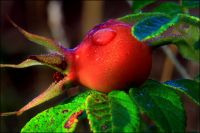 DEHYDRATED ROSEHIP