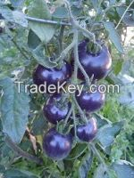 Organic Heirloom vegetable seeds