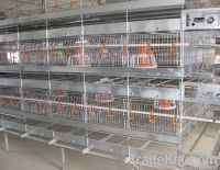 cage for growing broiler