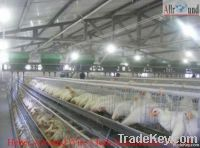 cages laying hens