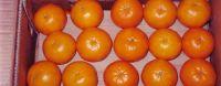 Kinno, Mandarin