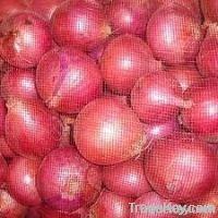 Fresh Onion@First-hand Price