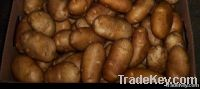 Potato@farm price