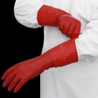 Latex Gloves + Powder free + Not Sterile Gloves