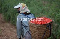 Organic Chinese Hot Sale New Crops Medlar , Organic Bacche Di Goji Berry