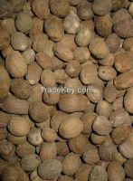 New corp Nutmeg/netmeg material