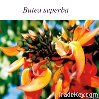 high quality Butea superba Extract
