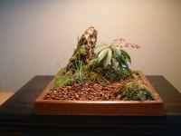 Japanese Zen & Moss Garden