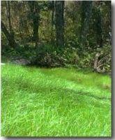 Perennial Ryegrass (Lolium perenne L)