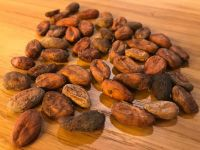Dried  cocoa  beans  raw